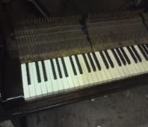 french polished piano key whitening